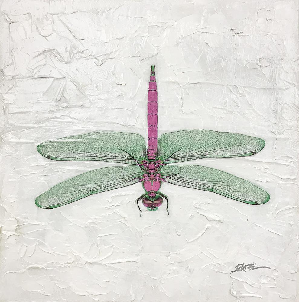 Dragonfly (17-24693)