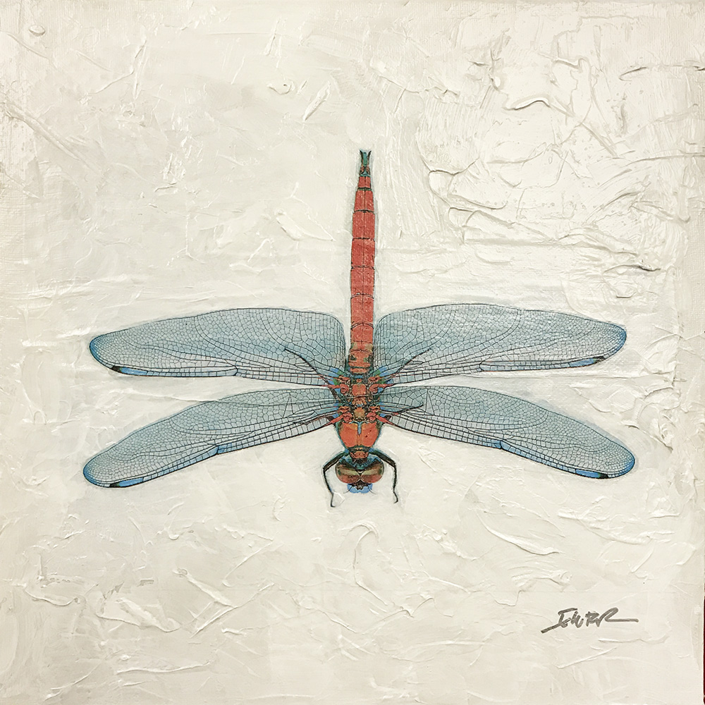 Dragonfly (17-24694)