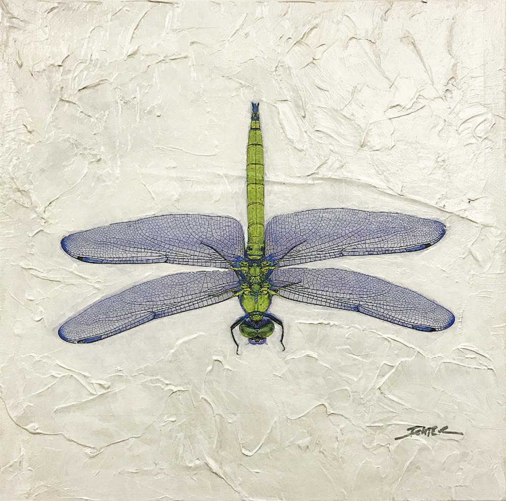 Dragonfly (17-24696)