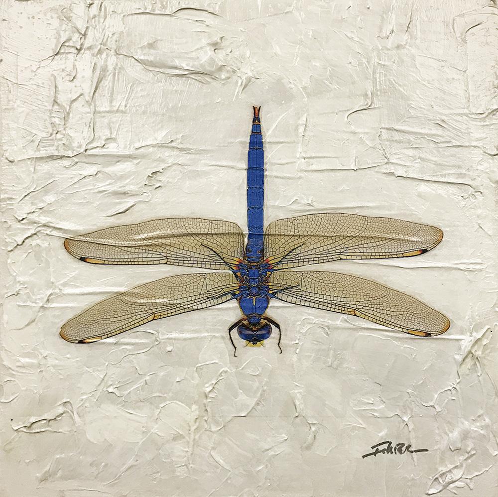 Dragonfly (17-24695)