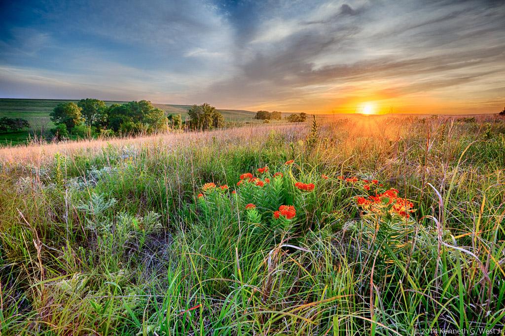 """West """"Blooming Prairie"""""""