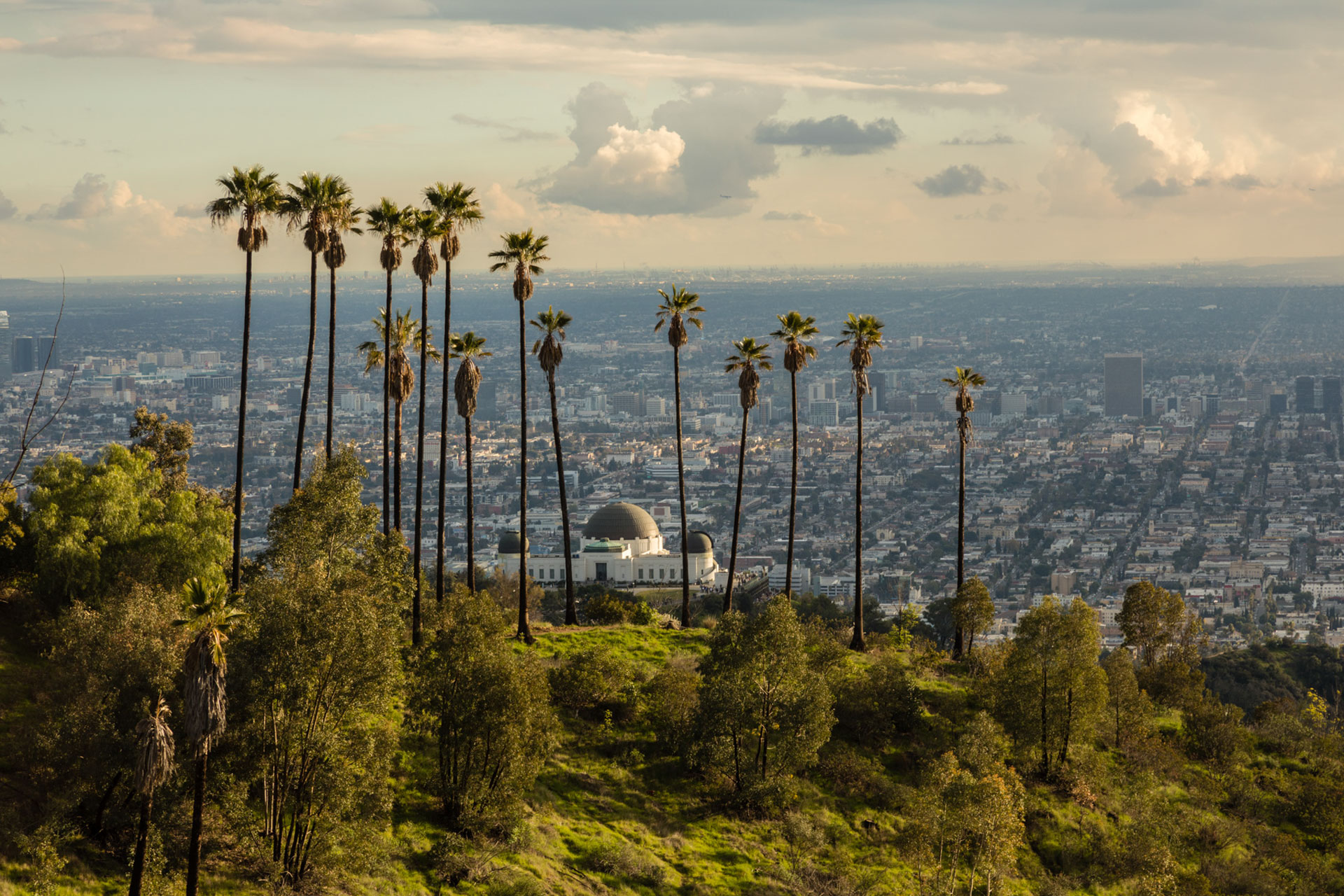 Griffith Observatory surrounded by skinny palm trees