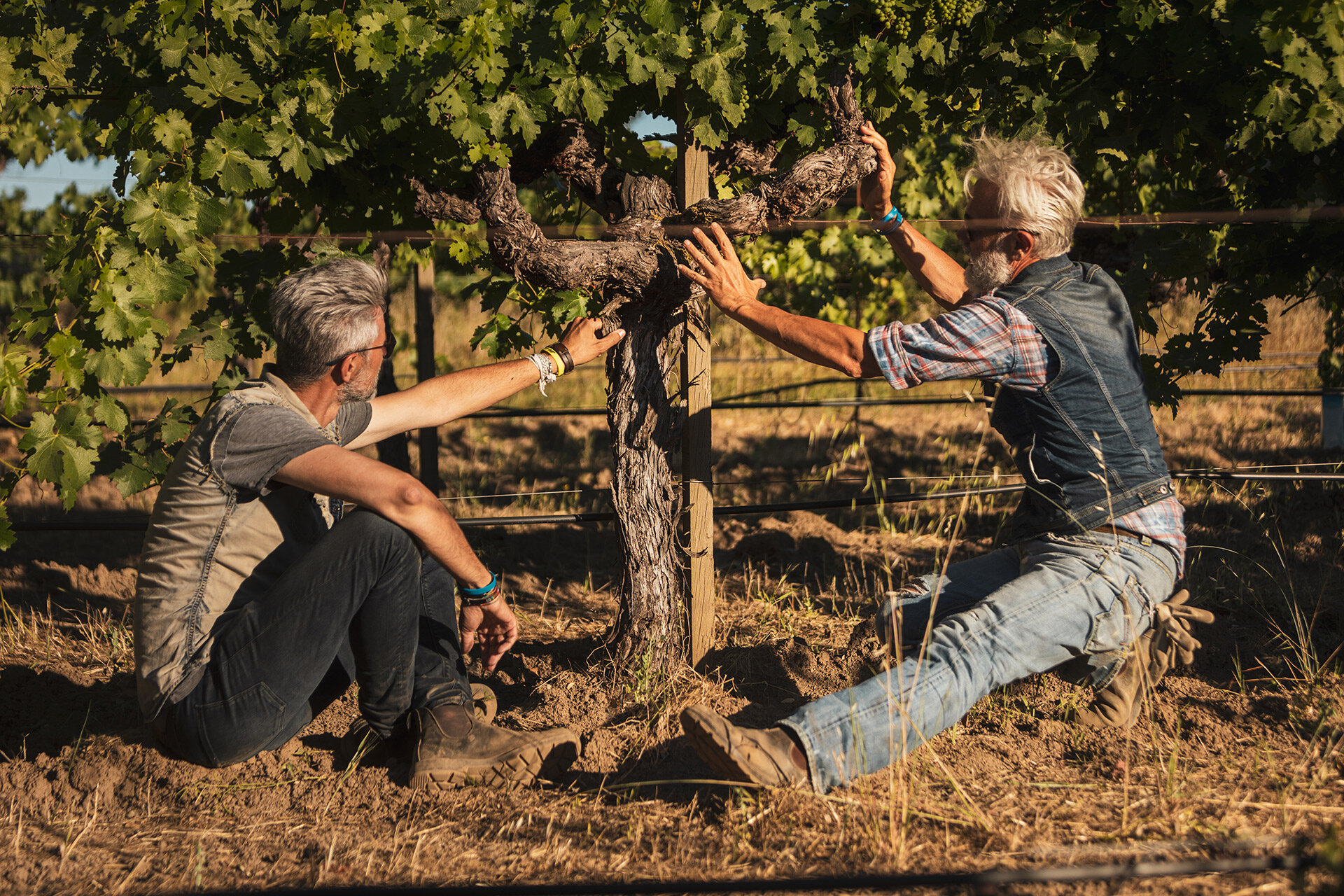 Marco Simonit and Massimo Giudici, Master Vine Pruners in Napa Valley