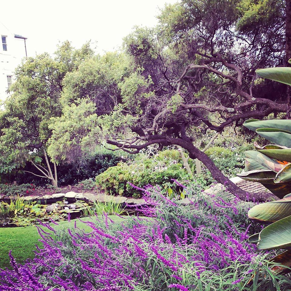 the garden in Fish park Elizabeth bay