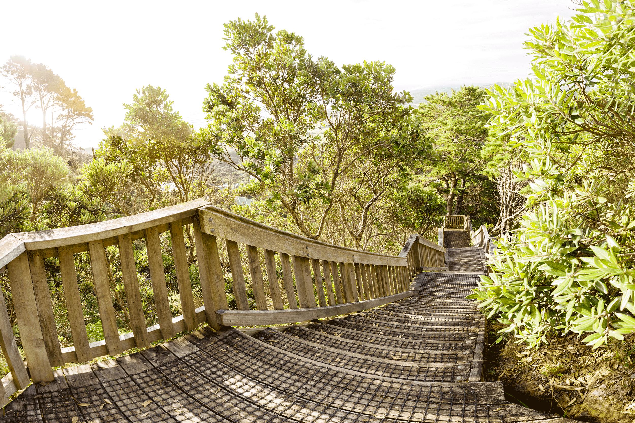 Oaia Bush Walk