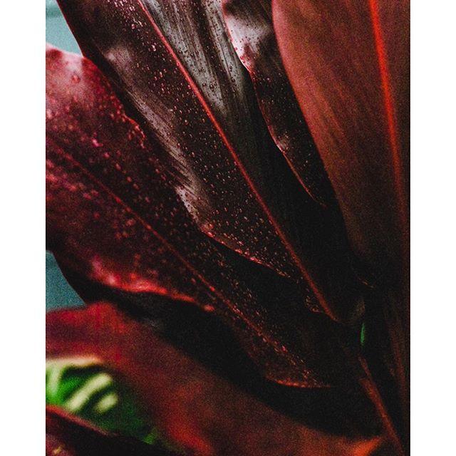 Rainy Season Shot with Pentax 67 on @Kodak Portra 400 . . . . . . . . . . . : . . #6x7 #travel #mediumformat #jurassicpark #adventuretravel #documentary #outdoors #pentax #analogphotography #oahu #hawaii #journalism #analog #film #adventure #pentax67 #120film #mist #portra400 #island #explore #kodak #staybrokeshootfilm #photography #plants
