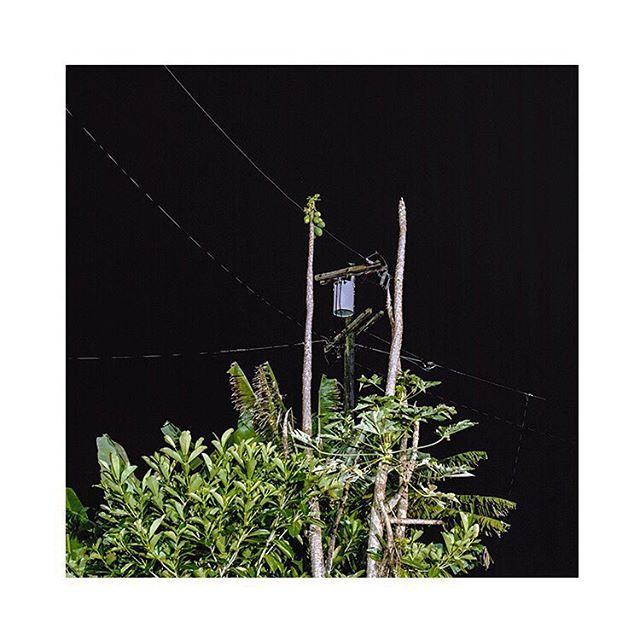 Papaya Trees Shot with Hasselblad 500CM on Kodak Portra 160 . . . . . . . . . . . . . . . . . . . , . , , . , #analog #journalism #hasselblad #plants #mediumformat #120film #film #shootfilm #travel #squareiscool #staybrokeshootfilm #documentary #explore #hawaii #photography #analogphotography #oahu #island #kodak #portra #nightphotography #longexposure