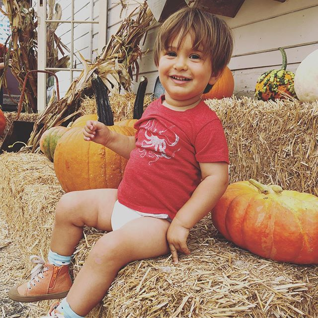 Noah lost his pants because he dumped a green juice down the front and 💩'd up the back. At least his shoes match the pumpkins. 🎃 #21monthsold #itsfall