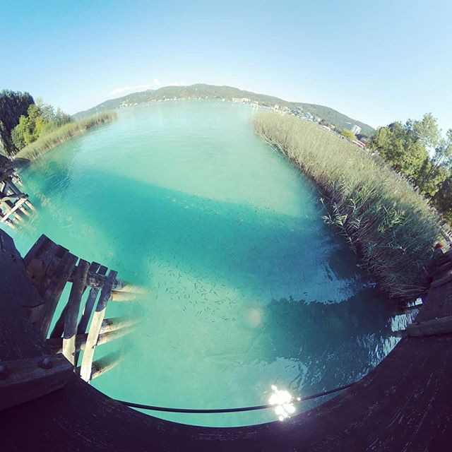 Even the fishes chill in the shaddow #wörthersee #Österreich #austria #lake #clearwater #kärnten #summer #summertime #azurblau #360 #360photo #360photography #360sphere #sphere #mi #misphere #planet #lifein360 #littleplanet #tinyplanet #360insta #insta360 #holliday #bluewater #pearl #bluepearl #beautiful #travel
