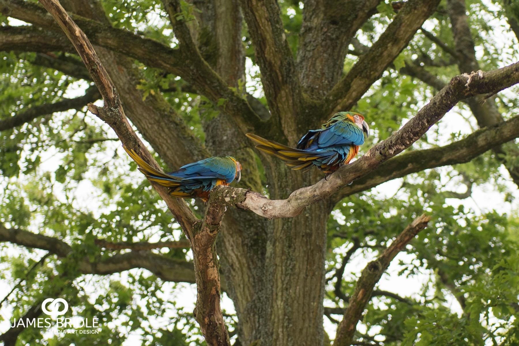 These beautiful birdsReminded me of someone!