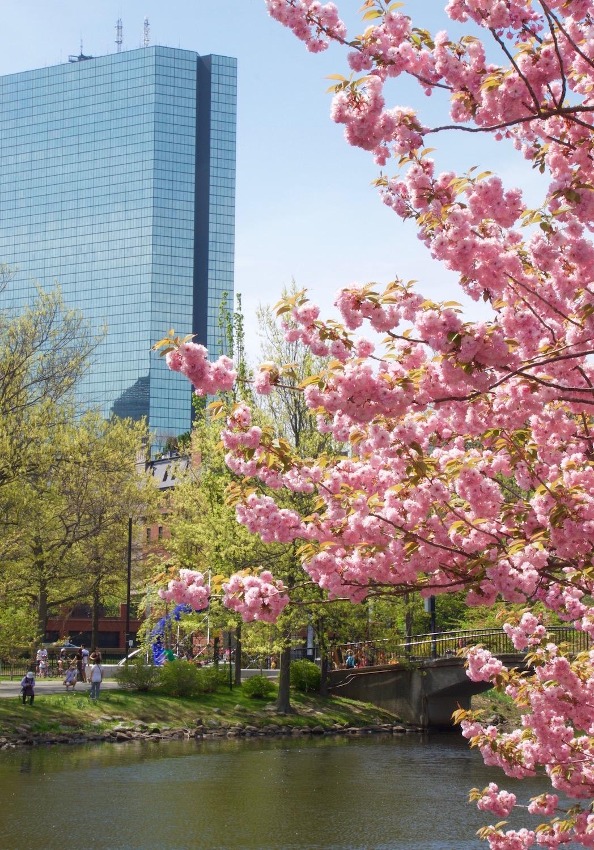 Charles River Blossoms .jpg