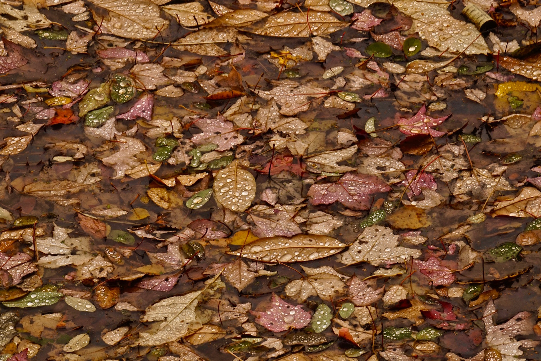 leavesreduced.jpg