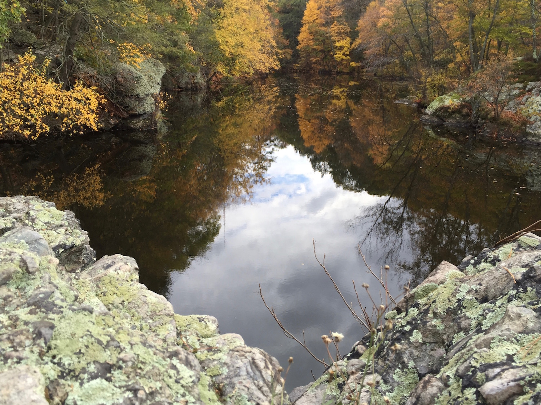 reflectionsreduced.jpg