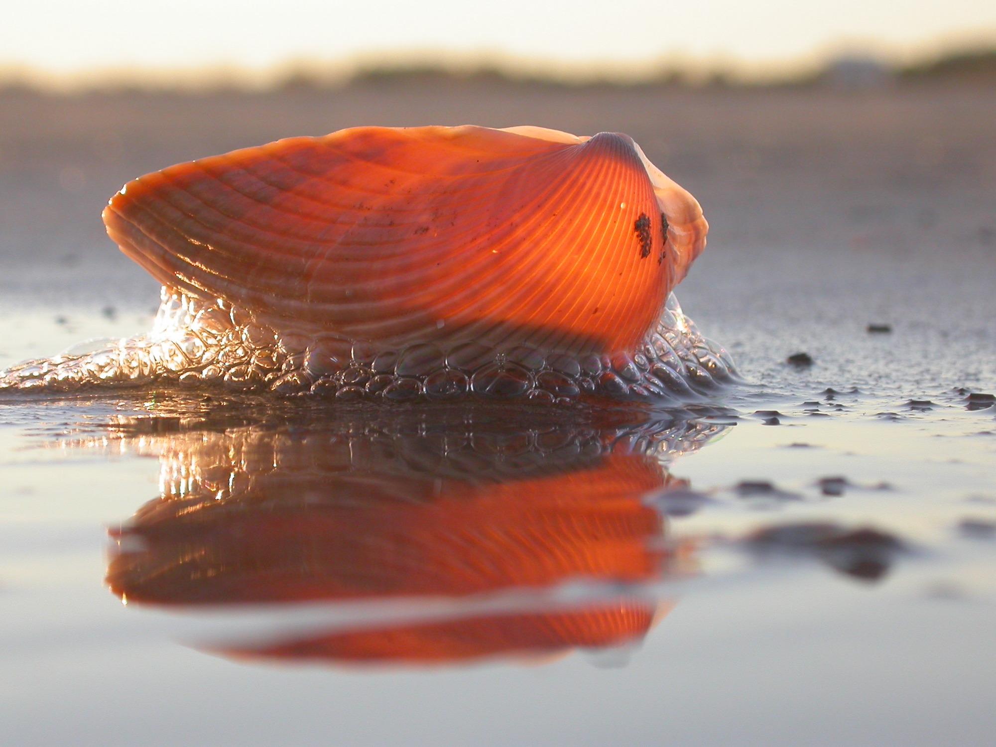 Macro Image of Shell
