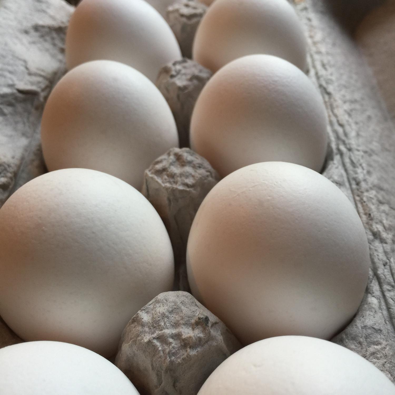 ordinary eggs merritt.JPG