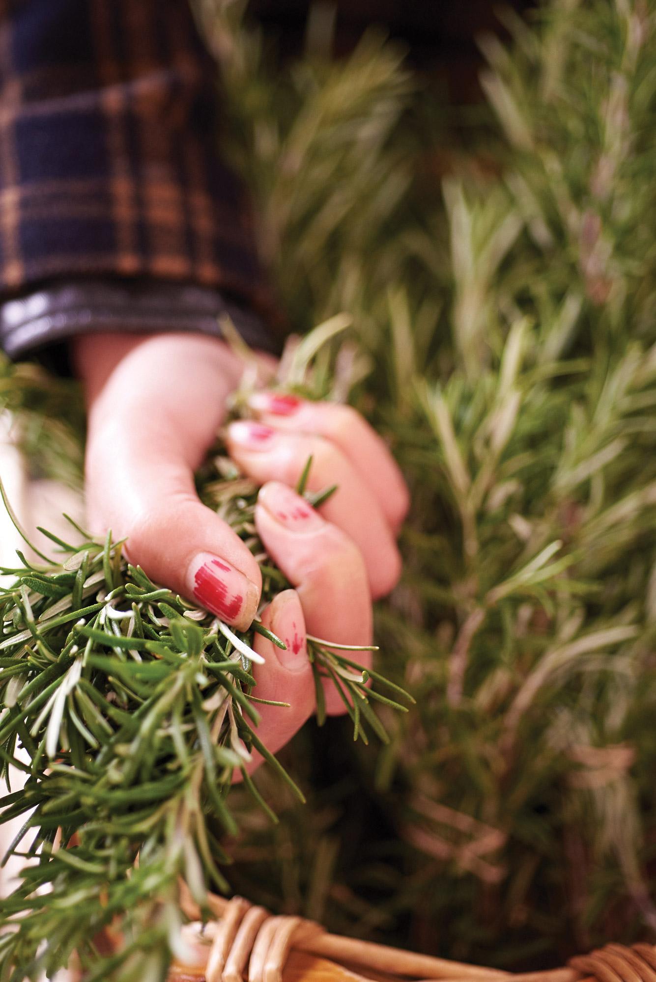 Aislinn Jefferies, Root Mass Farm, rosemary