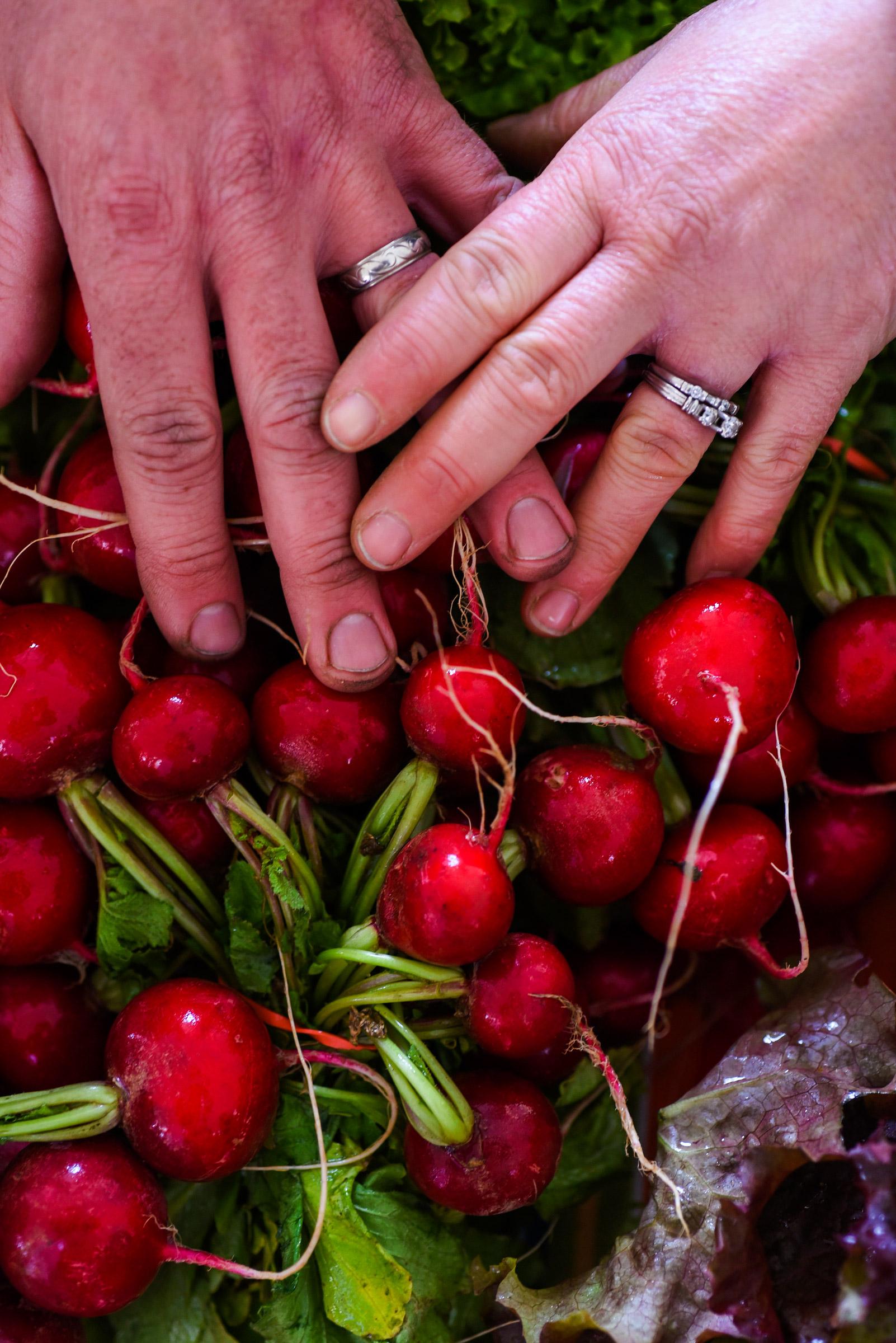 Barry and Carol Savoie, Savoie Organic Farm, radishes