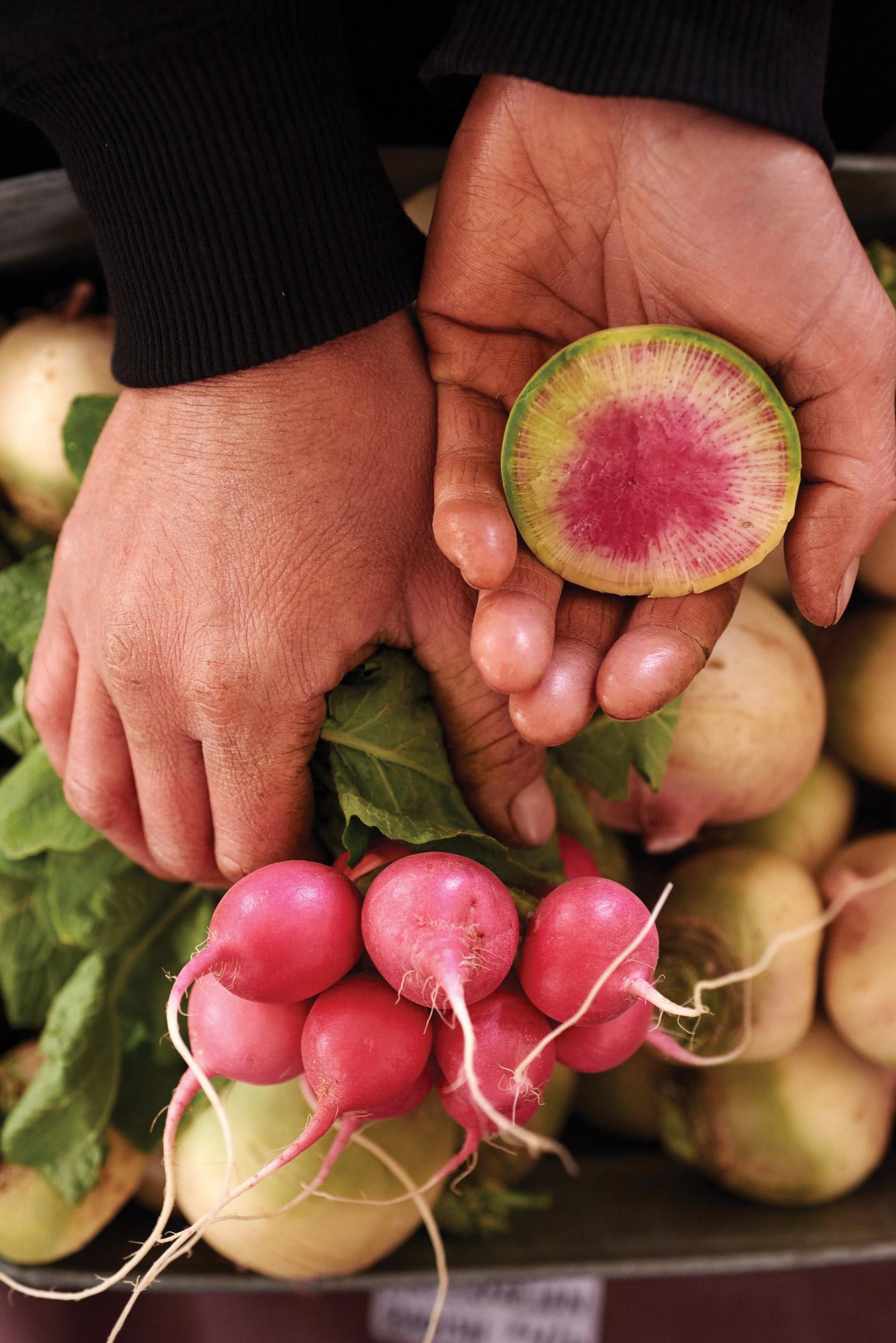Emma Dosch, Weavers Way, watermelon radish and pink radish