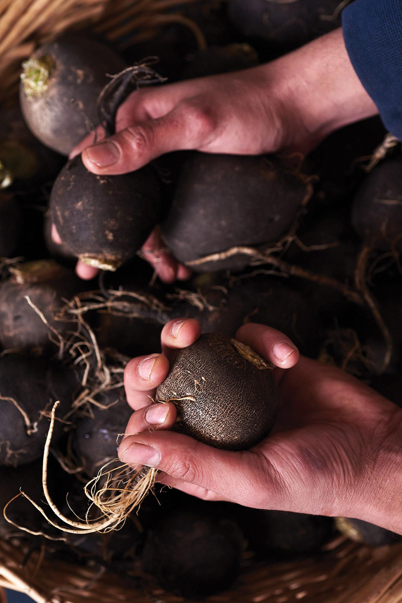 Loic Le Guen, Blooming Glen Farm, black radish