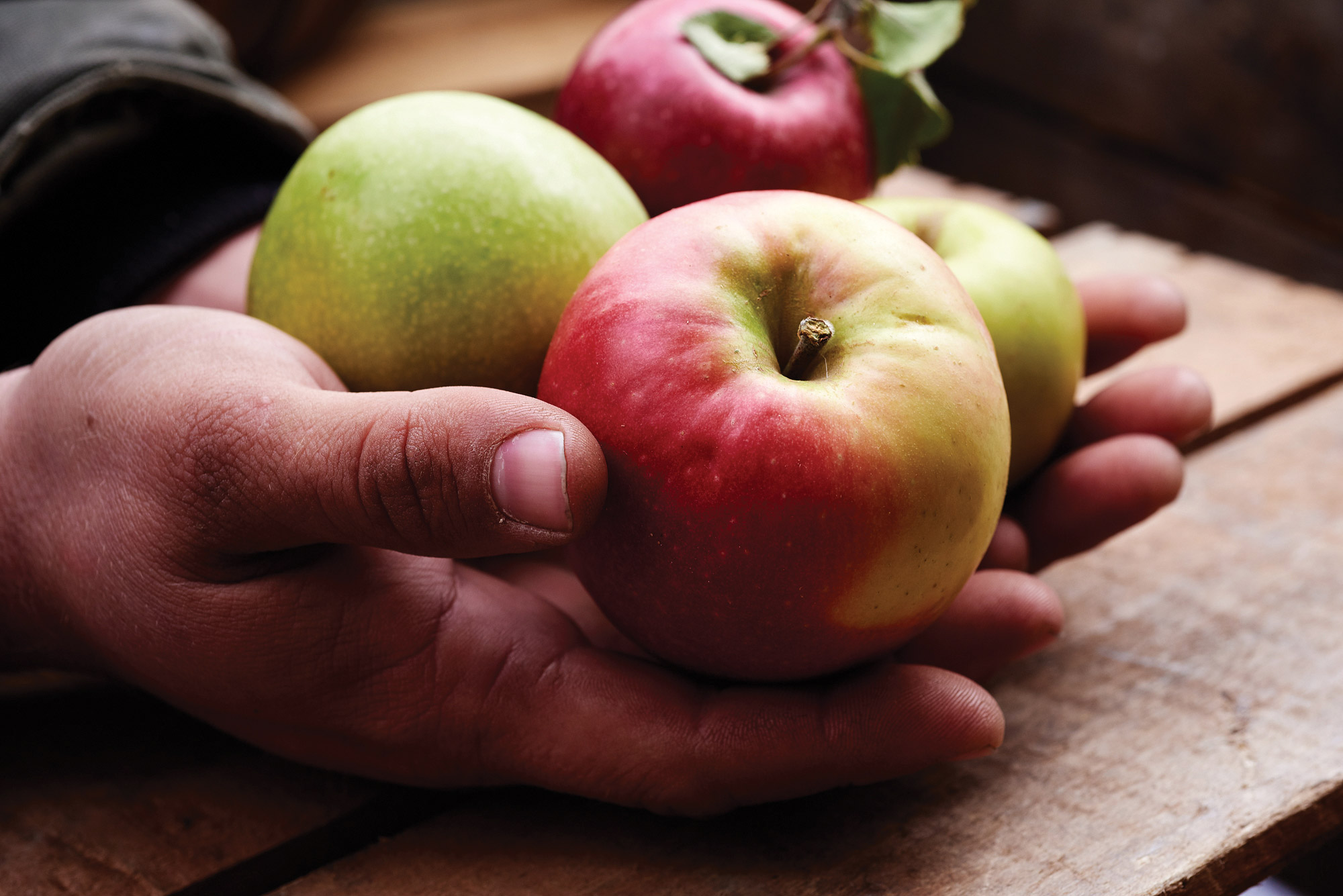 Ben Wenk, Three Springs Fruit Farm, apples