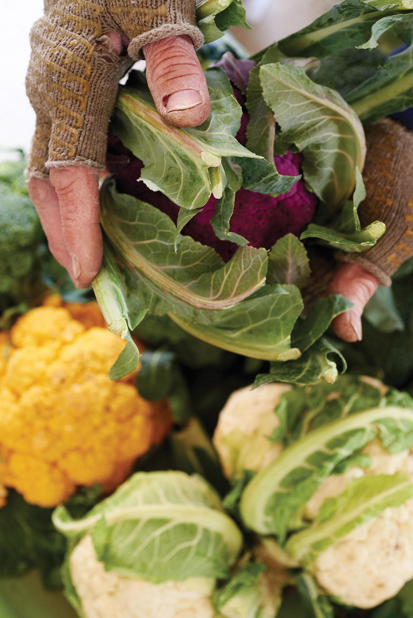 Dave Garretson, Beechwood Orchards, cauliflower