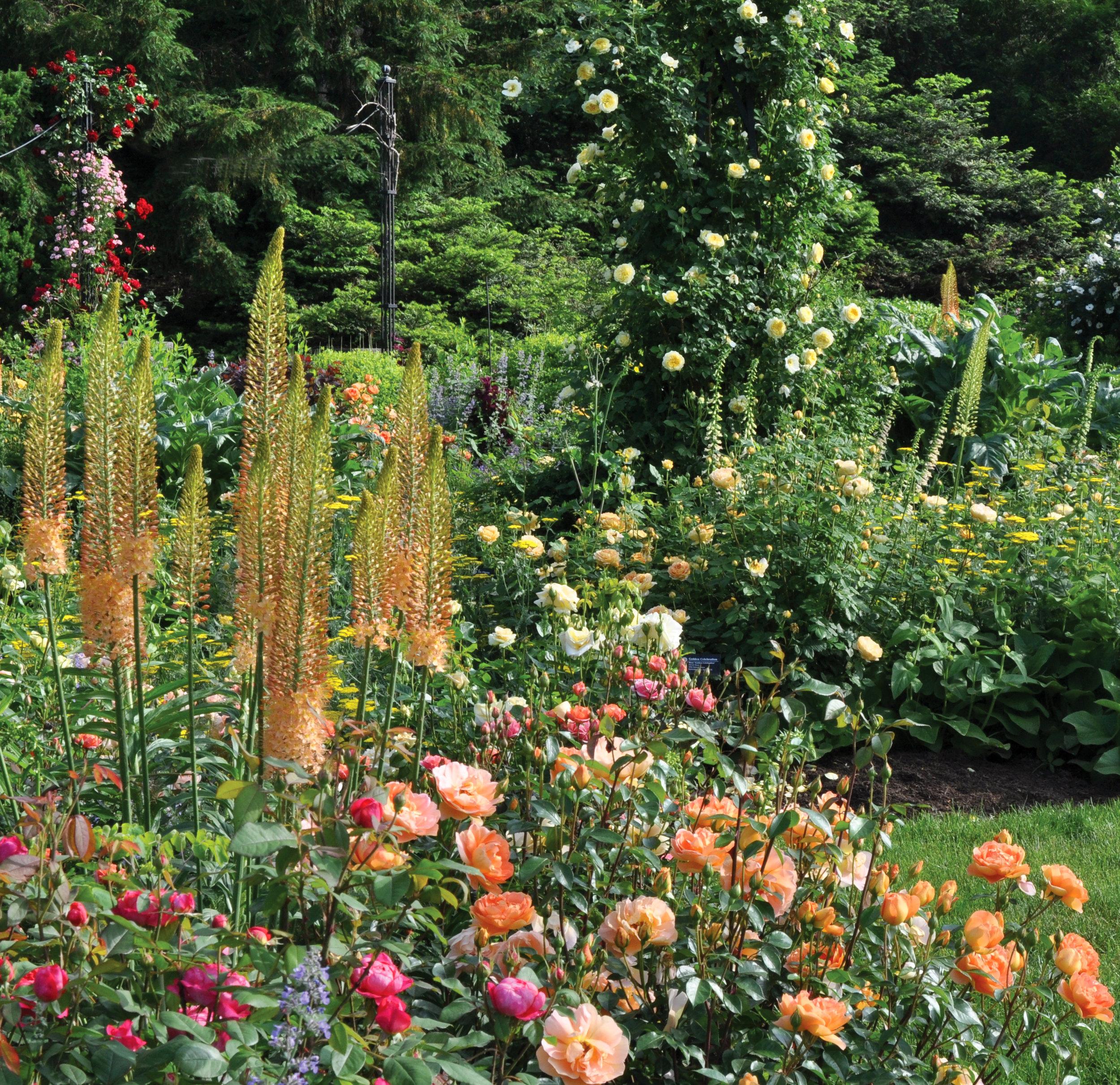 Morris Arboretum PM DSC_3831 edited.jpg