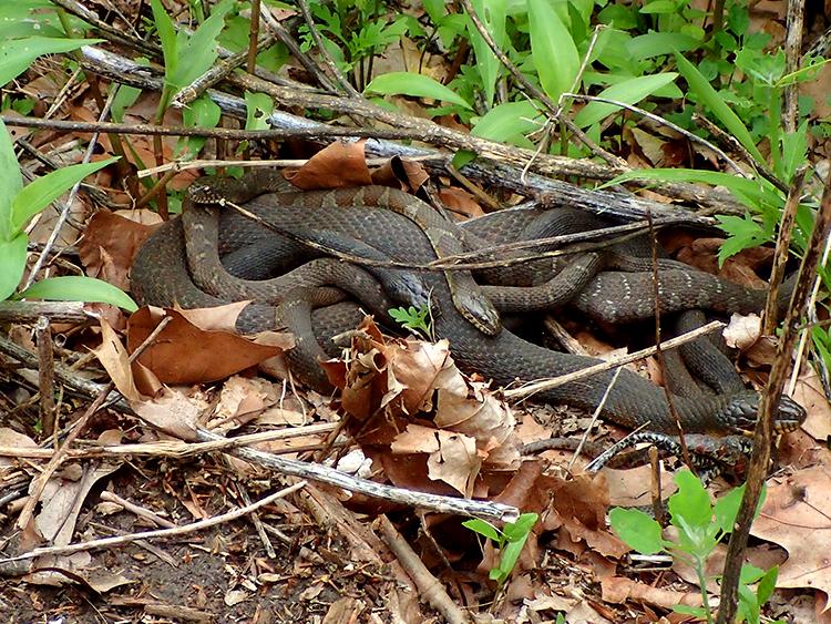 snakesalive2 2.jpg