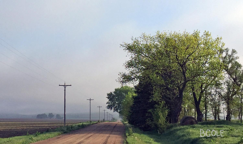 Morning Walk Photo ©Beth Cole