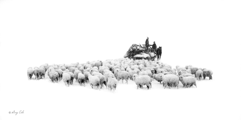 Winter's Feeding | Photography | 15 x 30 | © Gary Cole