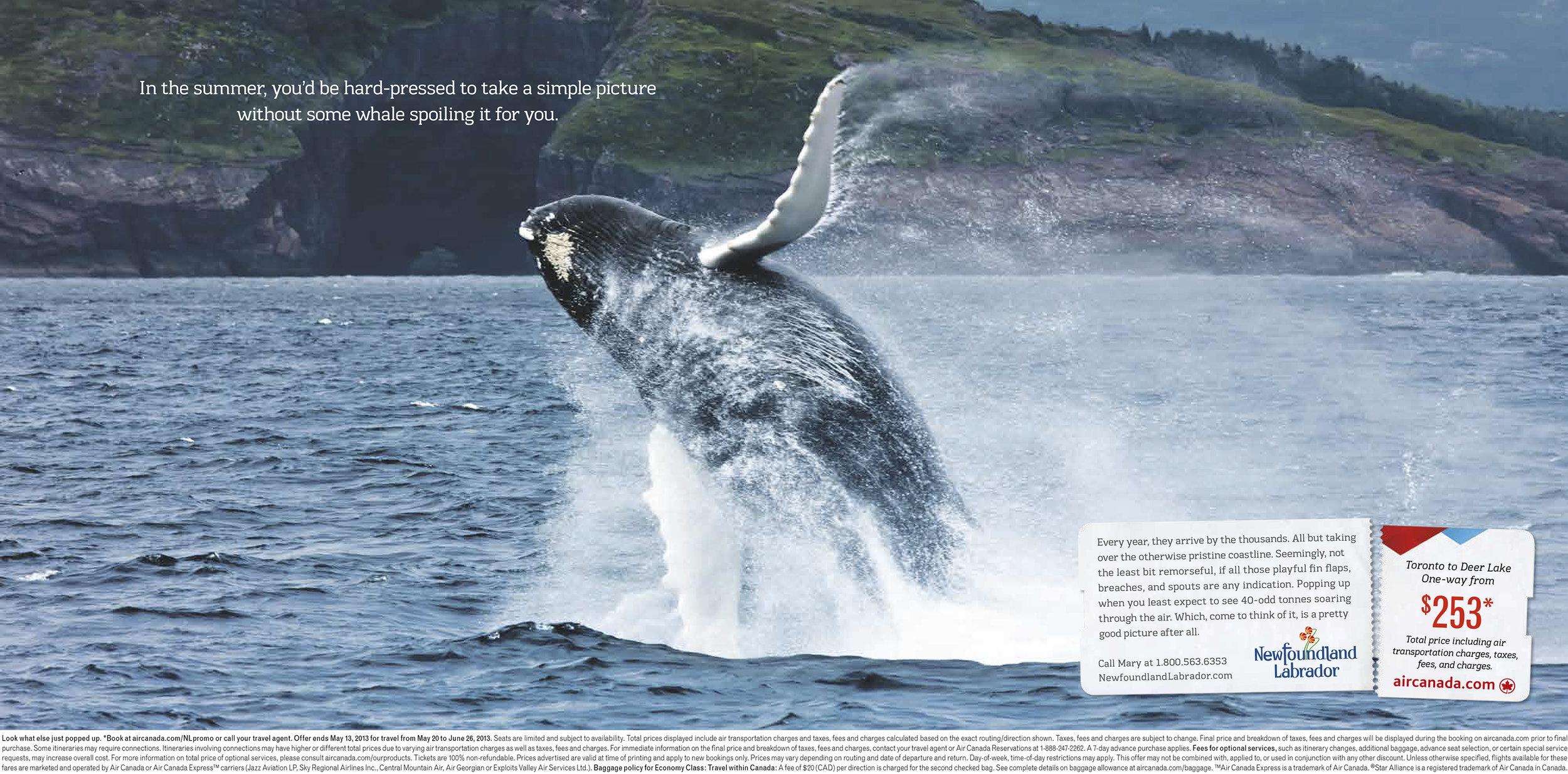 NLT2078-26-Whale.jpg