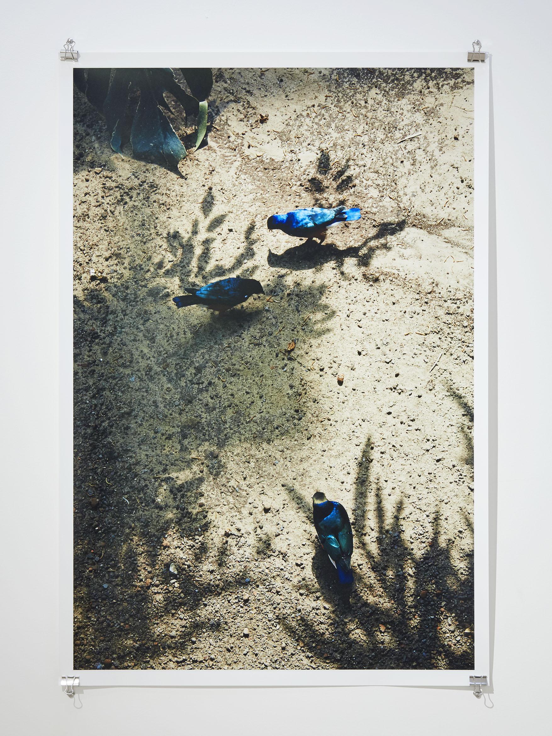 Birdhaus , 2015  Digital C-Type Print  70 x 48 cm