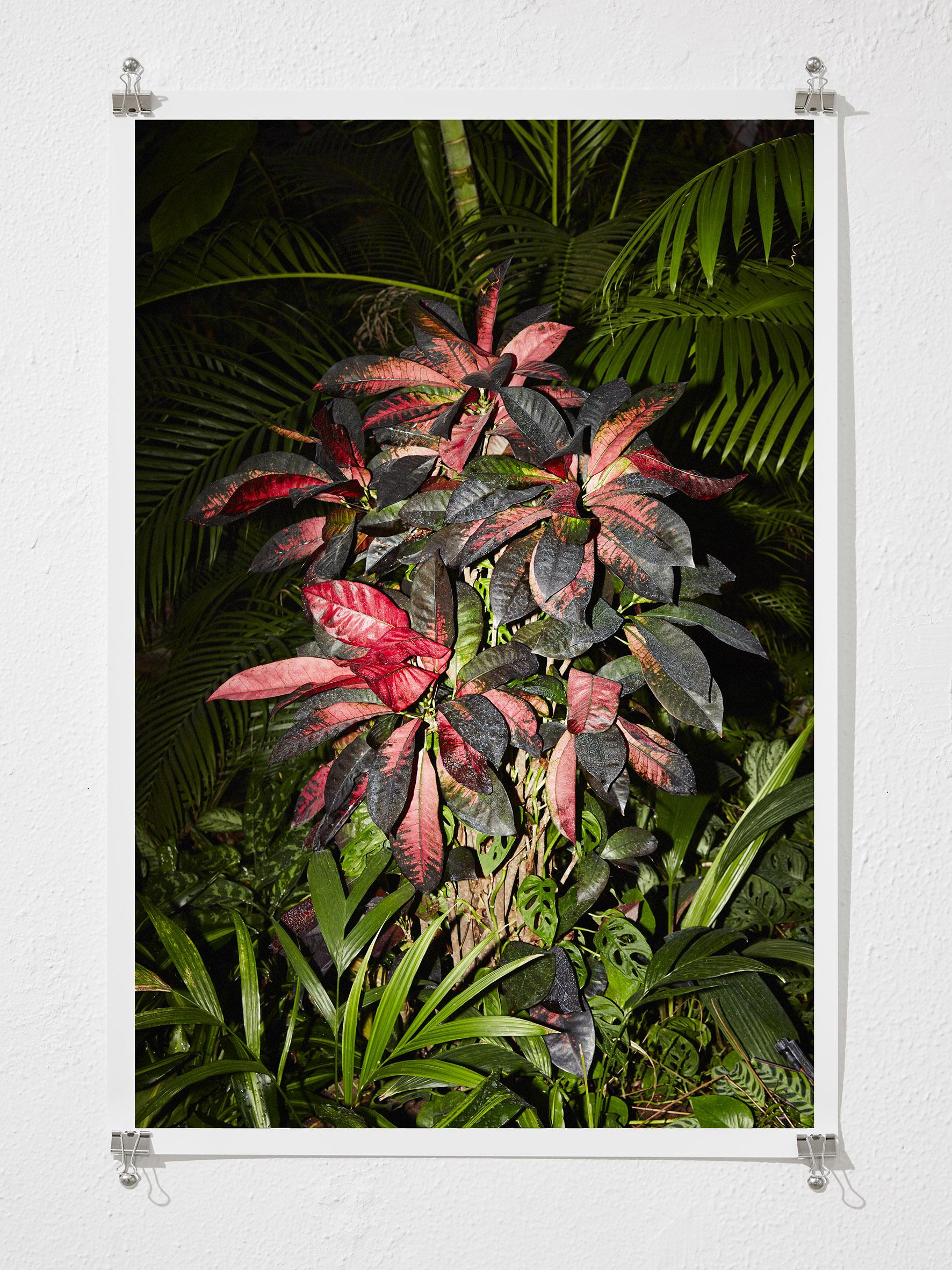 Low Light , 2015  Digital C-Type Print  70 x 48 cm