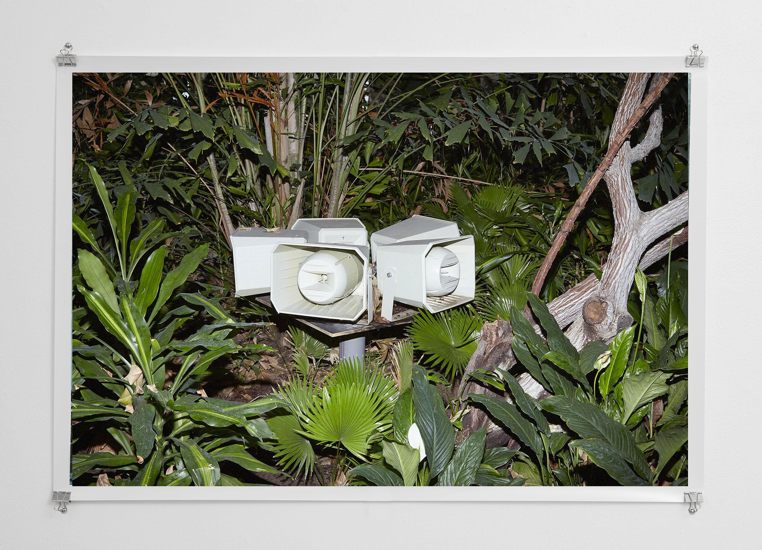 Bird Noises, 2015  Digital C-Type Print  48 x 70 cm