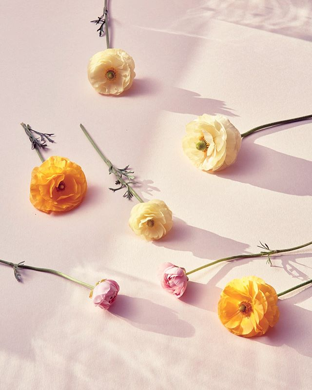 BLUMEN. A still life project from late last year.