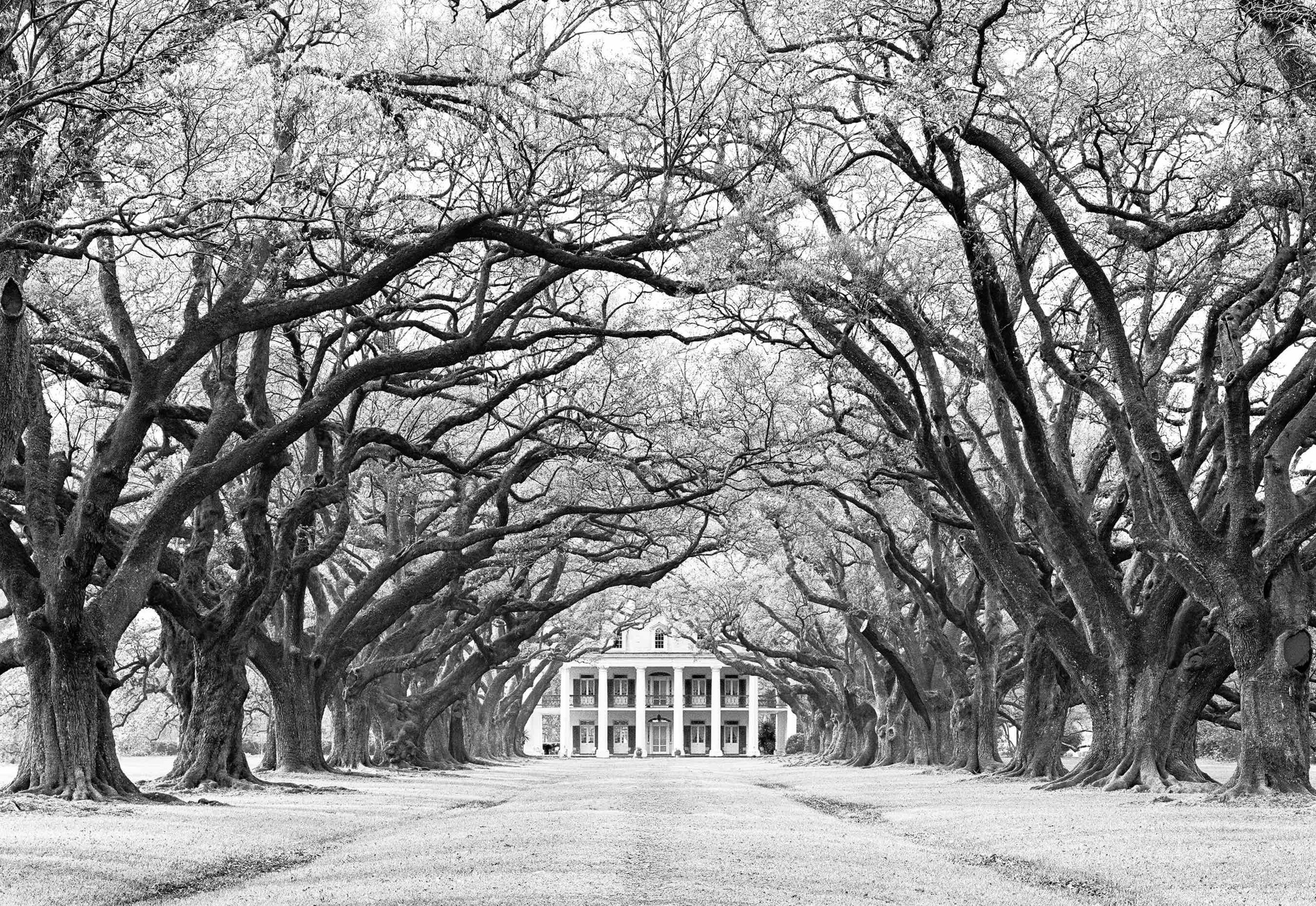 Oak Alley (Vacherie, LA) 1960