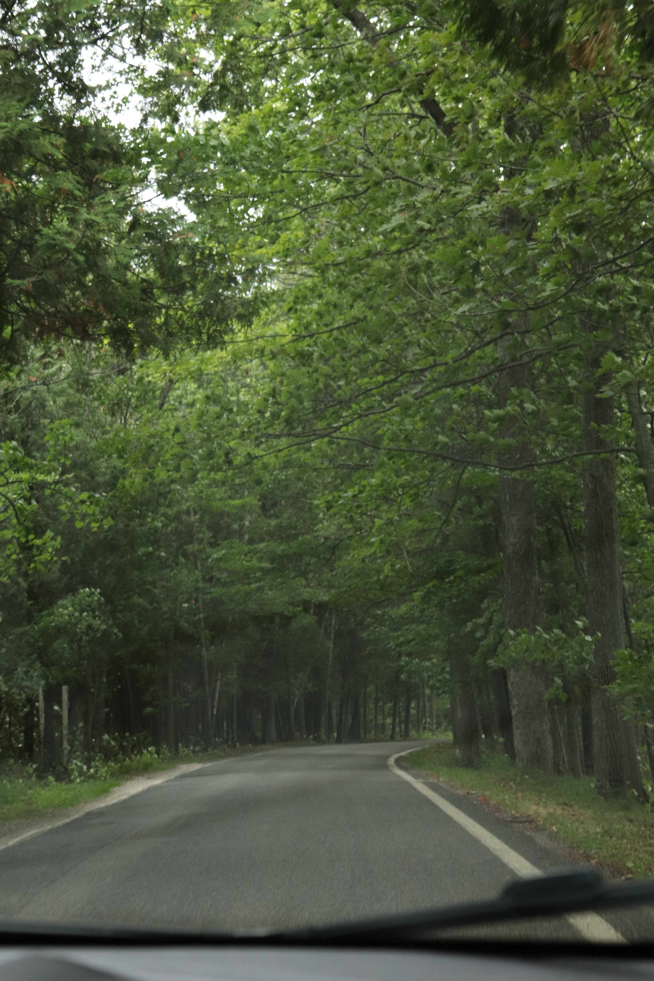 Tunnel of Trees - it reminded us of the Mountain Road in Smugglers Notch, only flat