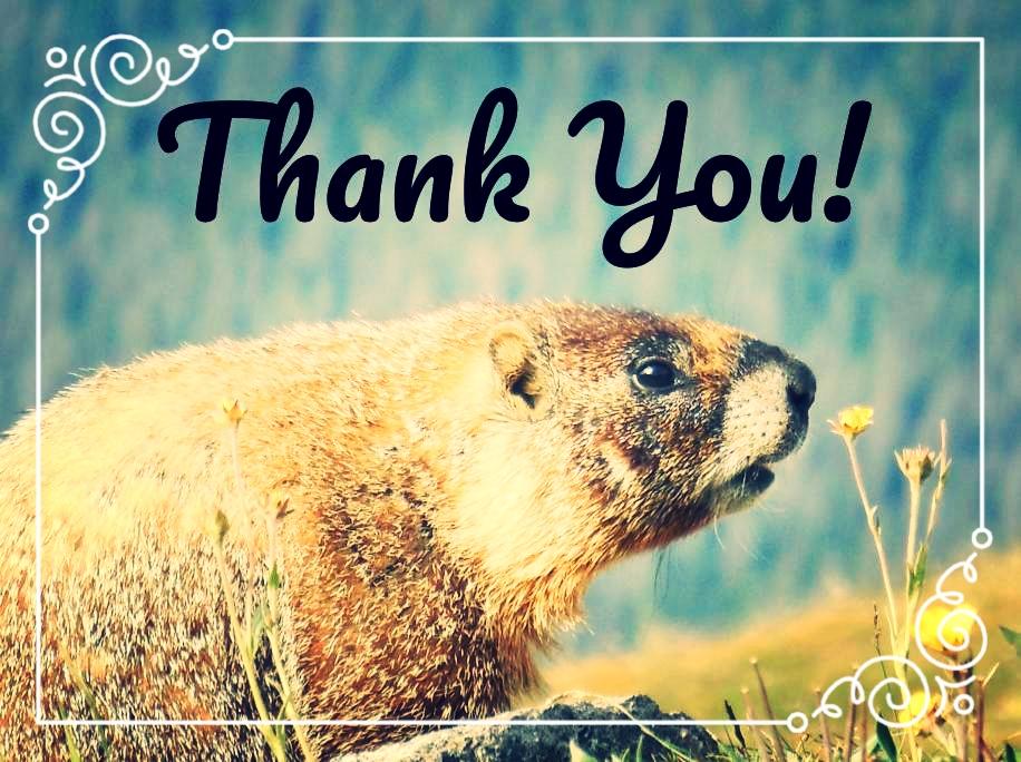 thank you marmot.jpg