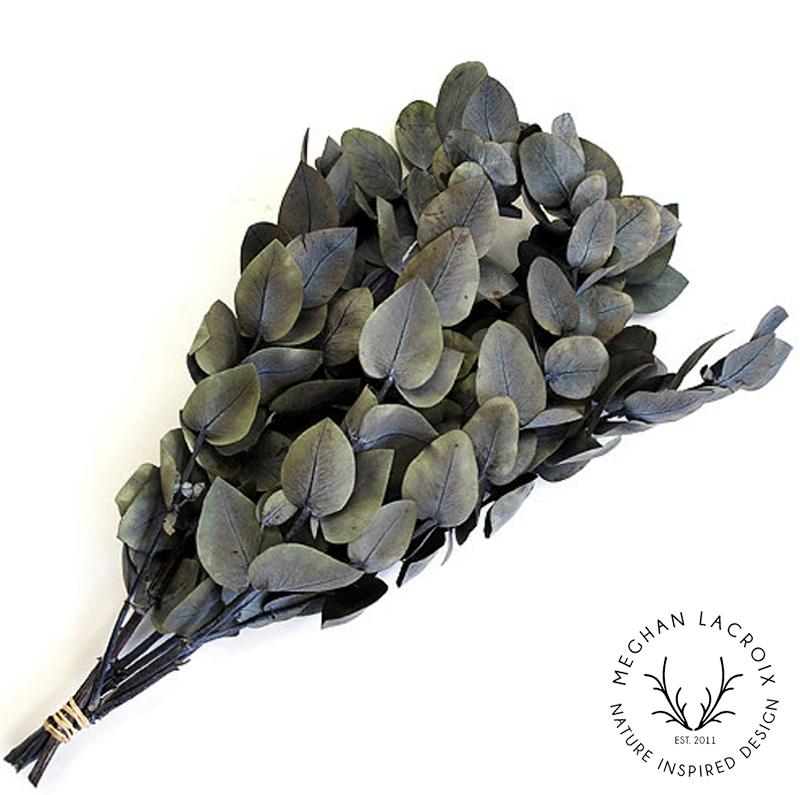 Eucalyptus Cinerea - Gray -