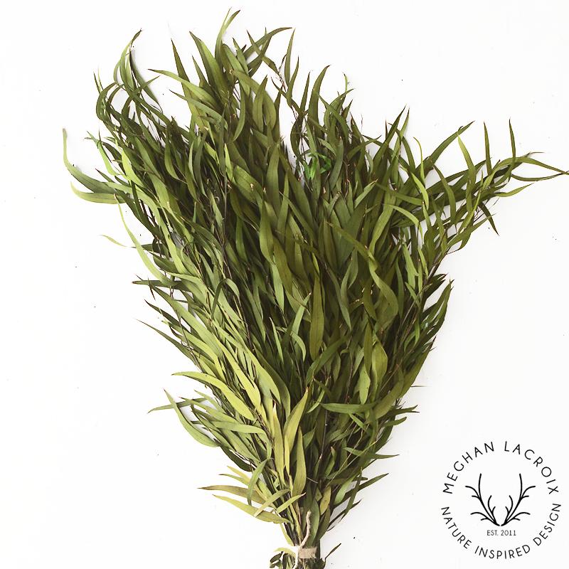 Nicoli / Willow Eucalyptus - Kiwi -
