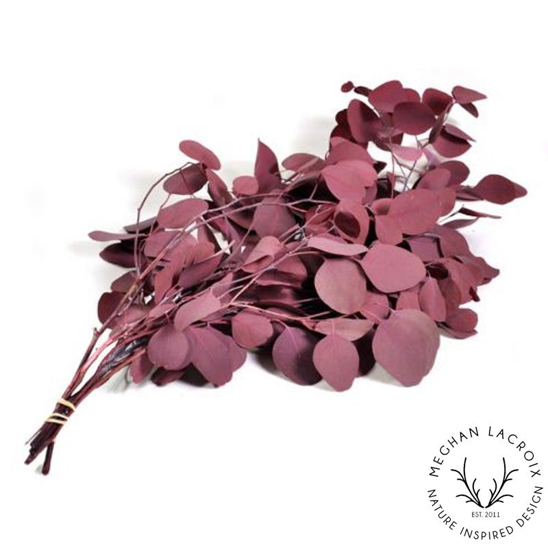 Silver Dollar Eucalyptus - Burgundy -