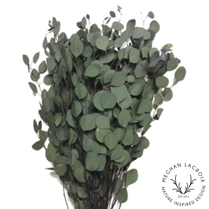 Silver Dollar Eucalyptus - Green -