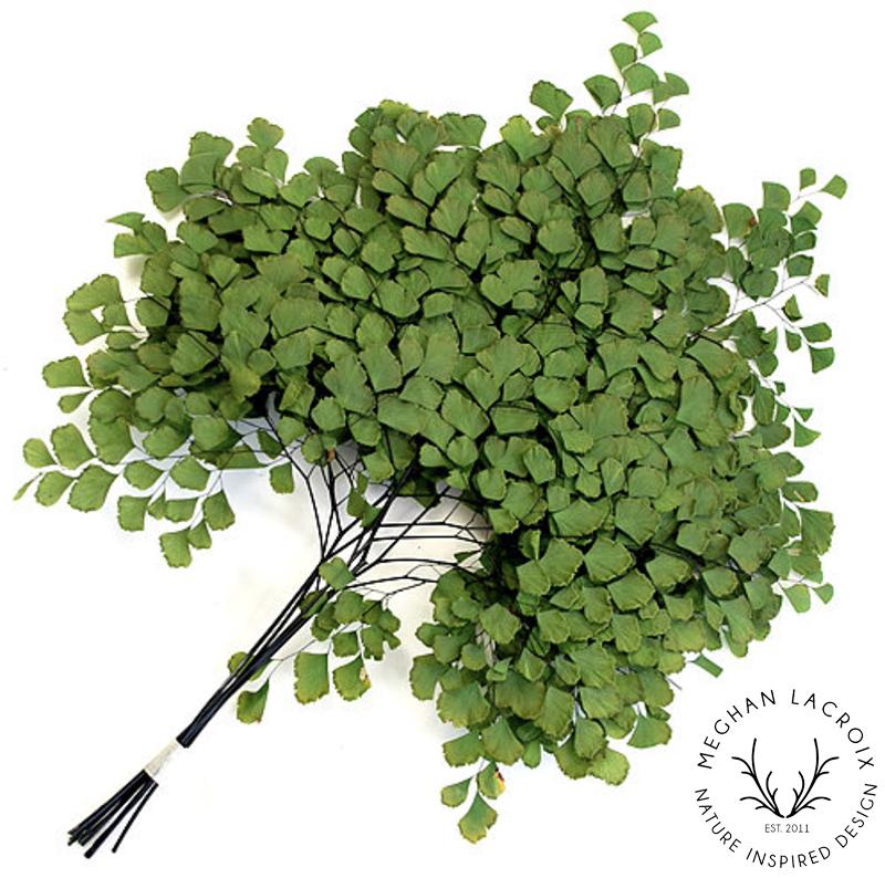 Adianthum Fern - Green -