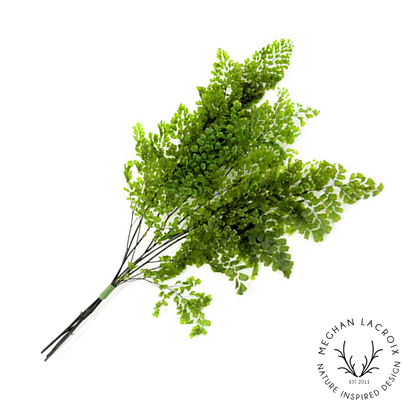 Lutti Adianthum Fern - Green -