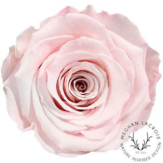 Blush Pink -