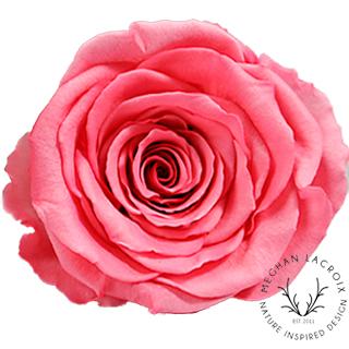 Warm Pink -