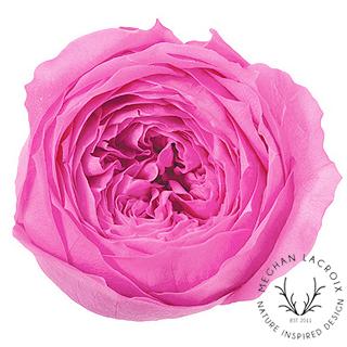 Princess Pink -