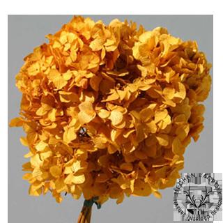 Aspen Gold -