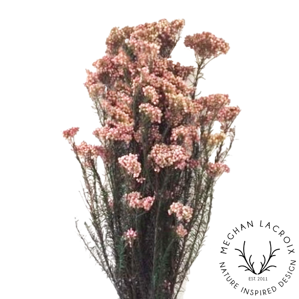 Rice Flowers - Pink -