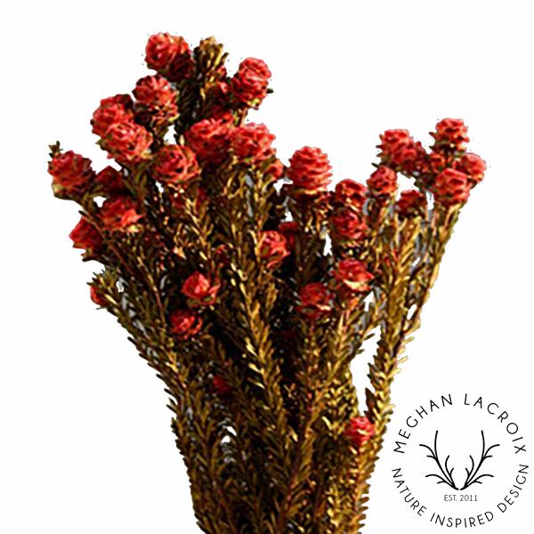 Female Tortum - Red -