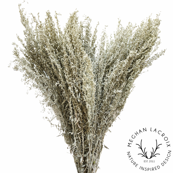 Artemesia (Silver King) -